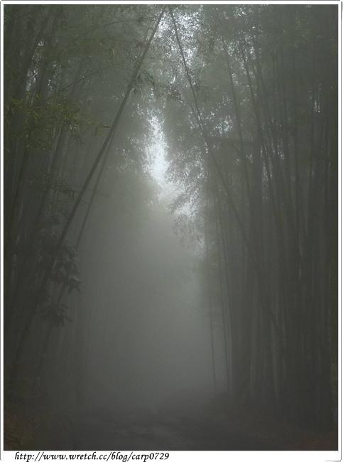 大雪山生態導覽之迷霧驚魂 @魚樂分享誌