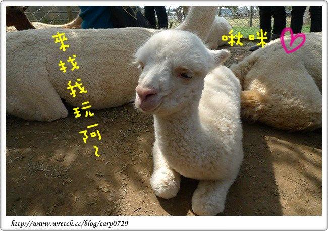 【台中】天馬牧場~熱鬧的草泥馬樂園^o^ @魚樂分享誌