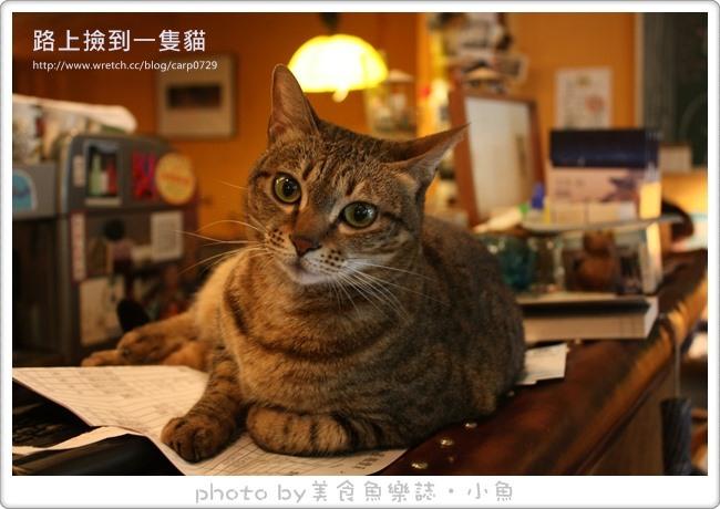 【台北大安】路上撿到一隻貓義式咖啡館 @魚樂分享誌