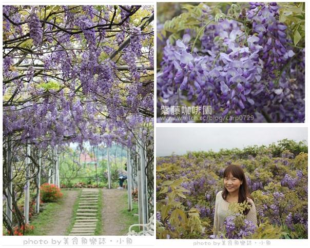 【新北淡水】紫藤咖啡園~浪漫的紫色風暴 @魚樂分享誌