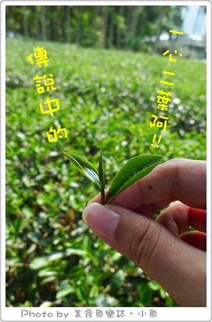 【新北三峽】農業好伴手,旅遊袋著走(下)~三峽茶鄉 @魚樂分享誌