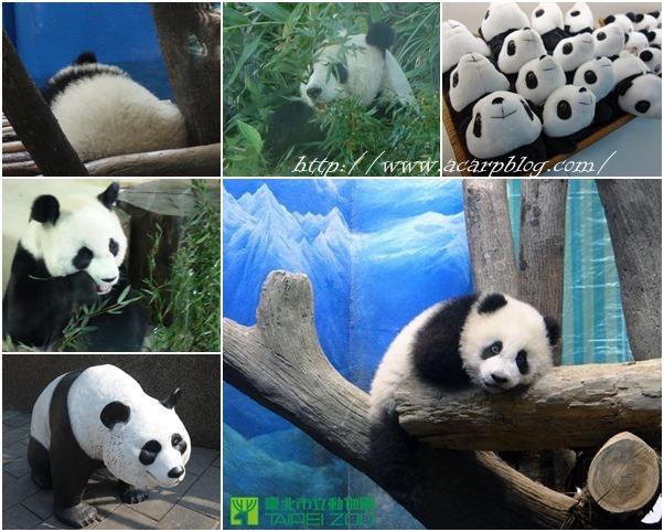 【台北文山】到木柵動物園看可愛大貓熊圓仔 @魚樂分享誌