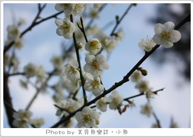【桃園】復興鄉賞梅@角板山行館‧角板山公園 @魚樂分享誌