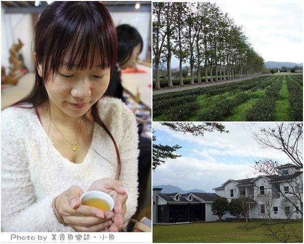 【台東】看見農遊新樂園~龍田烏龍茶遠足,綠色隧道單車遊 @魚樂分享誌