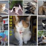即時熱門文章:【新北瑞芳】猴硐貓村一日遊/尋找喵星人