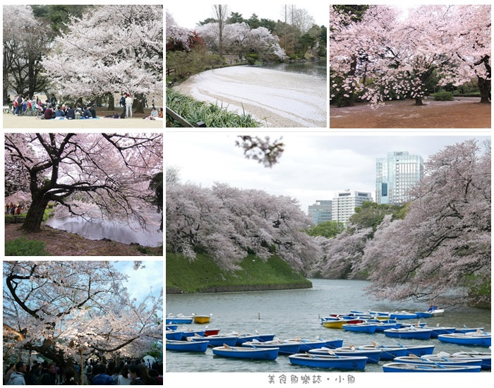【日本東京】2015賞櫻之旅Day2 (上) 築地本願寺/新宿御苑 @魚樂分享誌