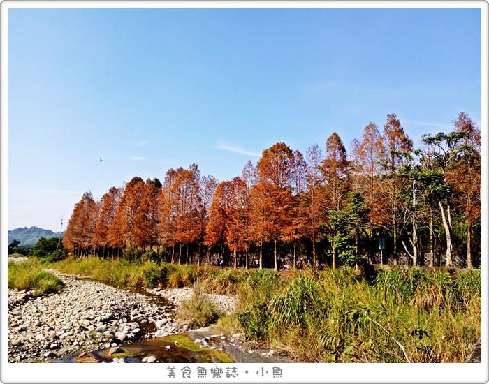 【雲林古坑】桂林村落羽松秘境/熱門景點 @魚樂分享誌