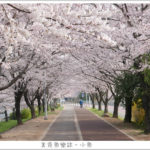 即時熱門文章:【韓國釜山】三樂江邊公園 삼락강변공원/兩公里超長超美櫻花步道