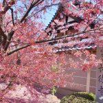 即時熱門文章:【京都旅遊】長德寺│京都最早櫻花│熱門賞櫻景點