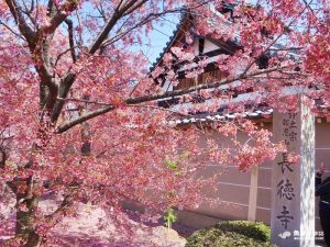 網站近期文章:【京都旅遊】長德寺│京都最早櫻花│熱門賞櫻景點