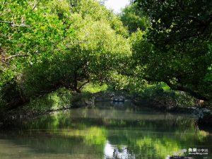網站近期文章:【台南旅遊】四草綠色隧道|袖珍版亞馬遜河