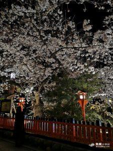 網站近期文章:【京都景點】2019祇園白川夜櫻|期間限定