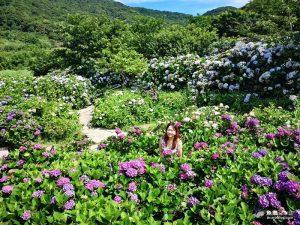 網站近期文章:【台北北投】2020繡球花季|陽明山竹子湖|花與樹繡球花田|門票交通資訊