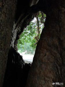 網站近期文章:【南投國姓】茄苳神木|300年老樹洞看見台灣