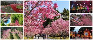 網站近期文章:【南投旅遊】2021九族文化村櫻花祭|交通 路線規劃 攻略 最新花況