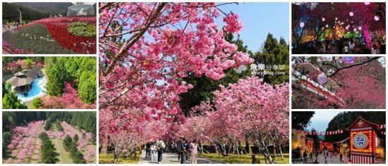九族櫻花祭